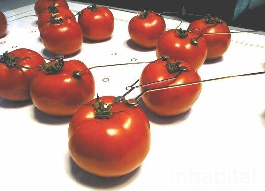 tomato-lamp-milan-2